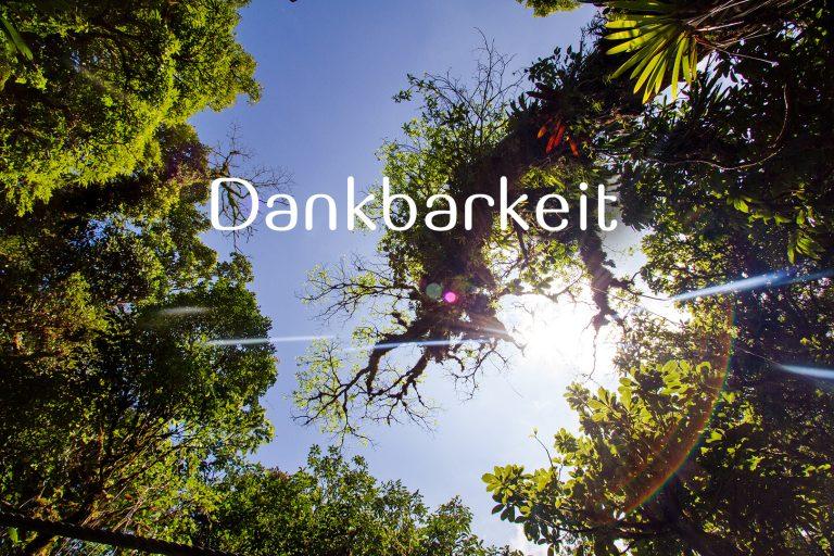 Dankbarkeit, dankbar sein; Costa Rica; Jungle