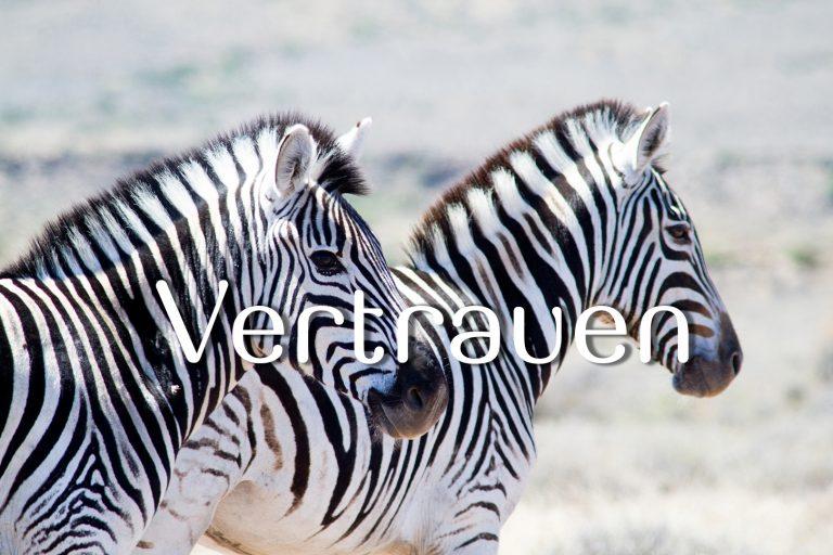 Vertrauen Zebras ZA