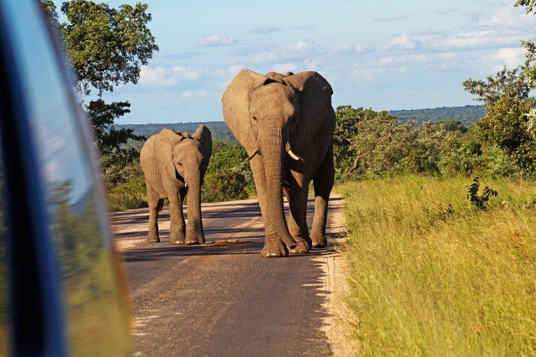 Vertrauen Elefanten ZA