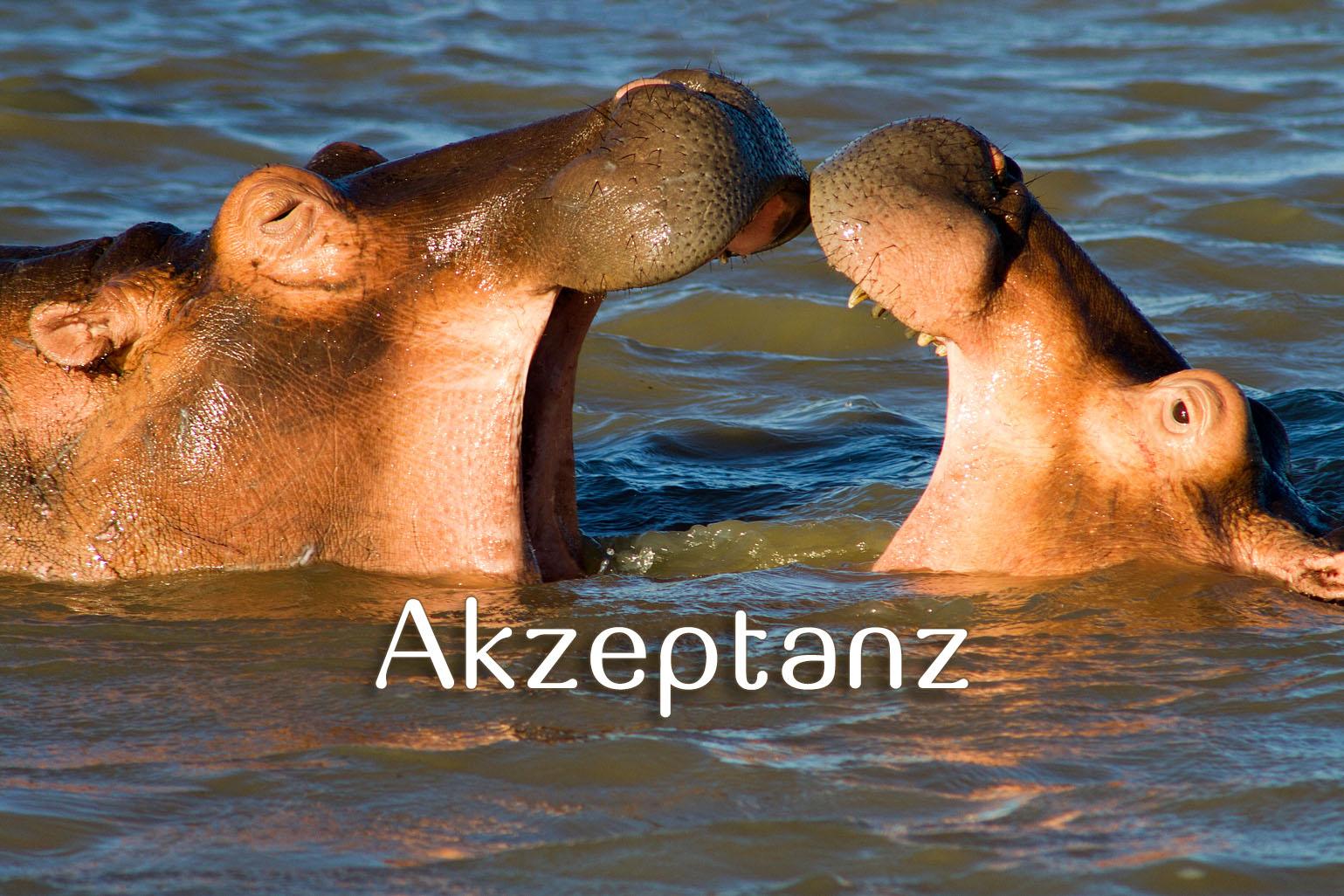 Akzeptanz_SouthAfrica_5695_Beitragsbild