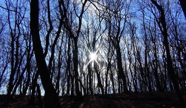 Gedanken loslassen; Sonne; Wald; Bäume