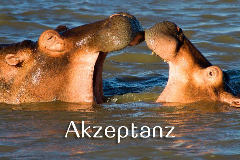 Akzeptanz; Nilpferde, Südafrika
