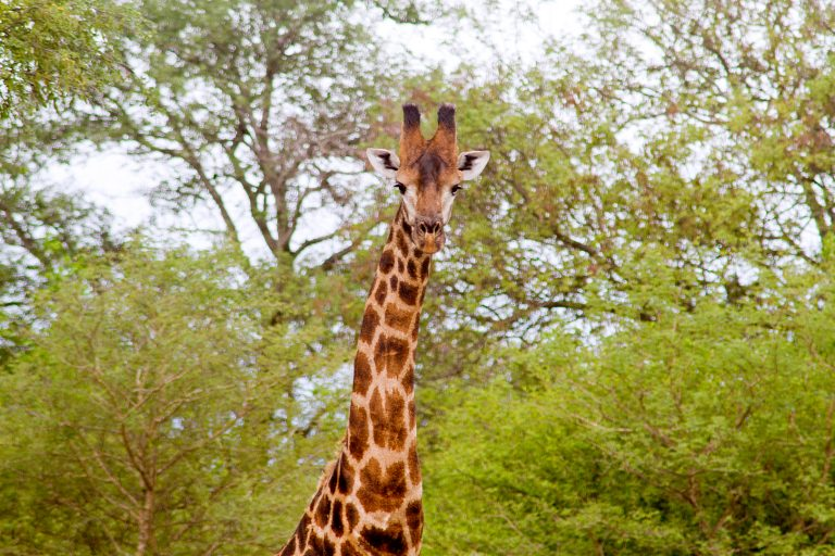 SouthAfrica_4717
